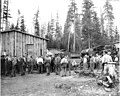 Logging crew at camp, train engine in background, Danaher Lumber Company, ca 1916 (KINSEY 140).jpeg