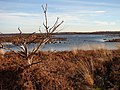 Lonesome tree - geograph.org.uk - 1172578.jpg