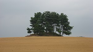 Luthor List Mound - Southern side of the mound