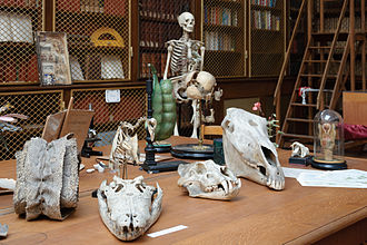 Natural history - A natural history collection in a French public secondary school