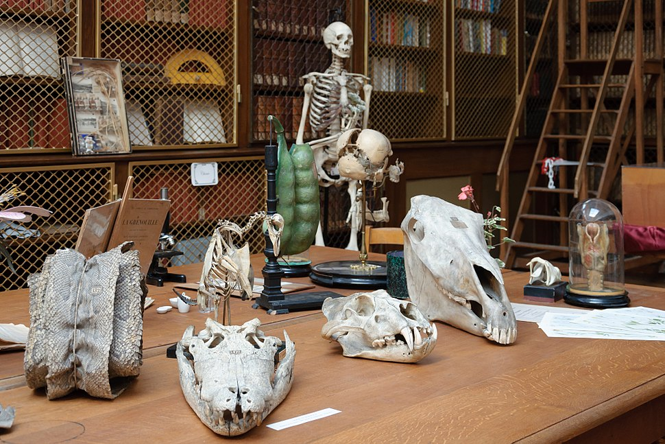 Lycee Michelet Vanves bibliotheque collection histoire naturelle