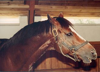Lyphard - Lyphard at Gainesway Farm in 1981