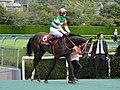 Lys-gracieux Rose-Stakes 2017.jpg