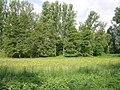 Mainauen Sulzbach 08.jpg