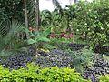 Maire Nui Gardens (7374339000).jpg