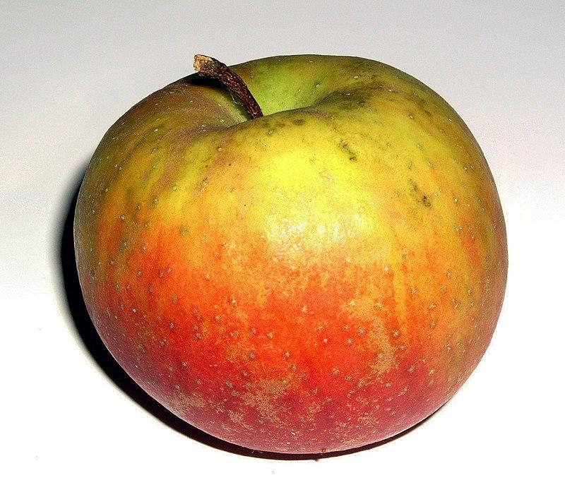 Malus-Boskoop organic.jpg