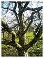 March Denzlingen - Master Season Rhine Valley Photography - panoramio (10).jpg