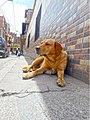 Marinilla Colombia - Street Dogs Perros Callejeros 07.jpg
