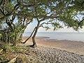 Maritime Hammock Nature Trail - panoramio.jpg