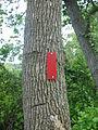 Mason Neck State Park - trail marker.jpg
