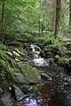 Massey Woods - geograph.org.uk - 2128112.jpg