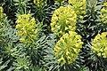 Massy fleurs rue Léonard de Vinci 2.jpg