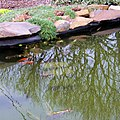 Master Garden Pond - panoramio.jpg