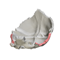 Mastoid border of occipital bone06.png