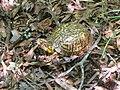 Mattaponi Wildlife Management Area, Virginia (7468016636).jpg