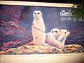 Meerkat - Wall Painting 2.jpg