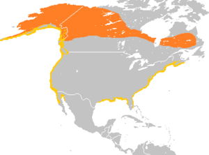 Surf scoter - Image: Melanitta perspicillata range map