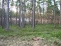 Melluzu mezs - panoramio (3).jpg