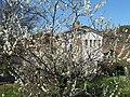 Melo in Fiore - panoramio.jpg
