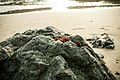 Mendocino Rock.jpg