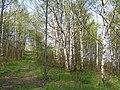 Metylovická pahorkatina, Na horách, les 01.jpg