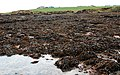 Mid Taing, Scapa Bay - geograph.org.uk - 1267113.jpg