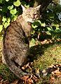 Mikołów koty 02.10.2011 4pl.jpg