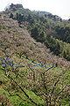 Minabe-Bairin Minabe Wakayama08n4272.jpg