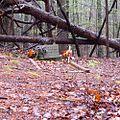 Mississippi John Hurt - grave.jpg