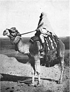 Mohammed and the Rise of Islam - A Bedouin on a Camel.jpg