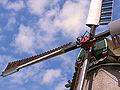 Molen De Traanroeier, Texel, askop met baard.jpg