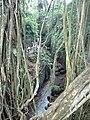 Monkey Forest Ubud inside.jpg