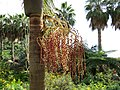 Monte Palace Tropical Garden, Funchal - 2012-10-26 (29).jpg