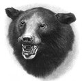 Moon bear face.png