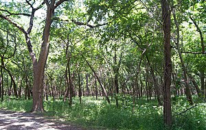 National Register of Historic Places listings in Coryell County, Texas - Image: Mother neff forest