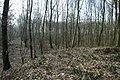 Motte op de Butsberg te Tielt-Winge - 372208 - onroerenderfgoed.jpg
