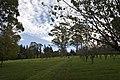 Mount Wilson NSW 2786, Australia - panoramio (88).jpg