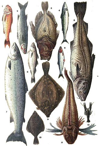 Mrs Beeton's Book of Household Management - Full-page 1907 colour plate of types of fish to buy from the fishmonger: red mullet, grayling, John Dory, mackerel, cod, whiting, salmon, herring, plaice, flounder, gurnet, crayfish