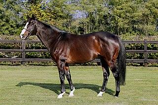 Mujahid (horse) American-bred Thoroughbred racehorse