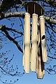 Murkšķi priecājas par pavasari - panoramio.jpg
