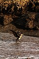 Murtosa - 'Bird'.jpg