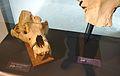 Musée-forum de l'Aurignacien - Collection - Herbivores et carnivores - 02 - 2016-05-22.jpg