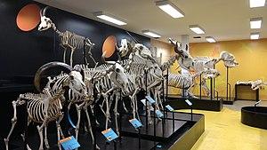 Museum of Veterinary Anatomy FMVZ USP - Image: Museum of Veterinary Anatomy (FMVZ USP) 07