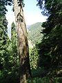Mushkpuri trek a beautiful tree.jpg