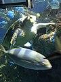 Myrtle the Green Sea Turtle 03.jpg