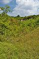 Národní přírodní památka Růžičkův lom, Čelechovice na Hané, okres Prostějov (03).jpg