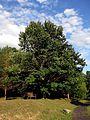 Nannen Arboretum 20160819 06.jpg
