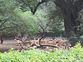 National Zoological Park, Delhi (12).jpg