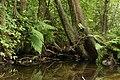 Nature reserve Niva Olšového potoka in summer 2014 (14).JPG