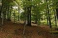 Nature reserve Vlčí důl in autumn 2014 (3).JPG